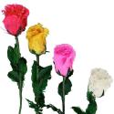 ROSA PLUMAS COLORES MINI PARA ALFILER
